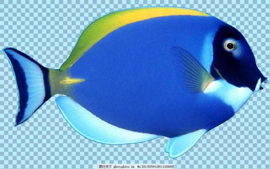 图片免抠png透明图层素材 鱼照片 卡通鱼 鱼图片大全 可爱卡通鱼图片