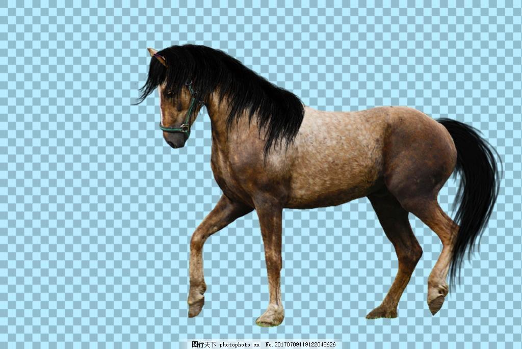 正在走路的骏马马免抠png透明图层素材 家畜动物 可爱动物图片