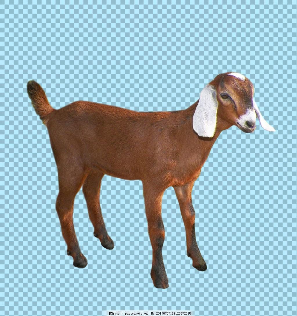 棕色毛发站立的山羊免抠png透明图层素材