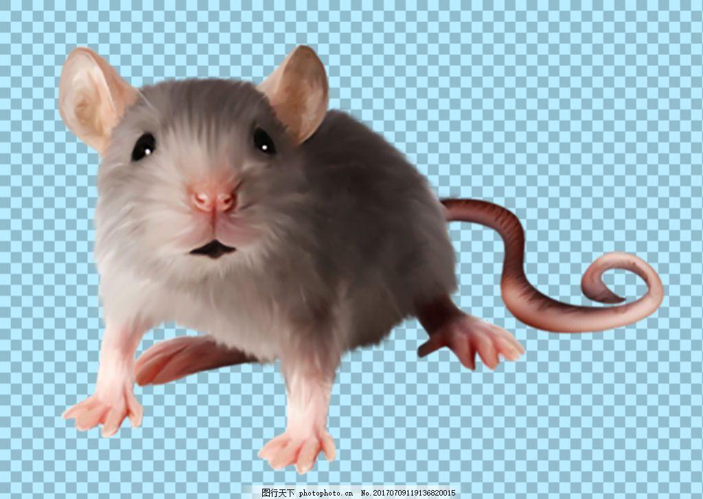 可爱的小老鼠免抠png透明图层素材