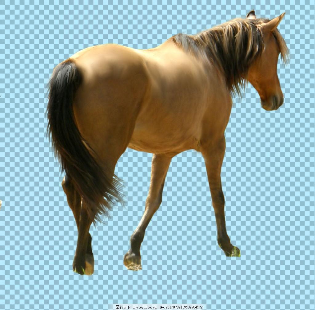 正在走路的马免抠png透明图层素材 家畜动物 可爱动物图片 家禽