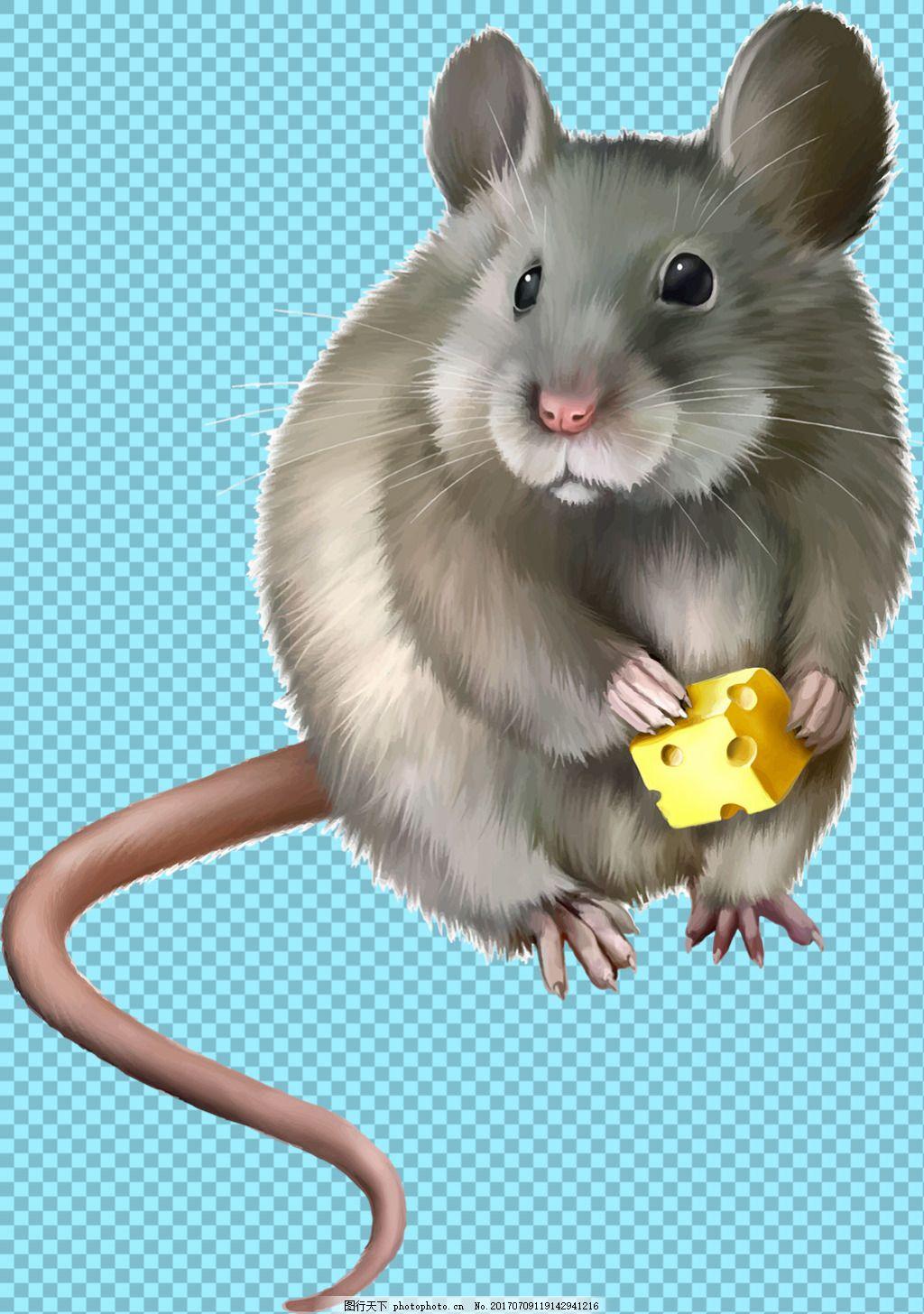 手绘可爱老鼠免抠png透明图层素材