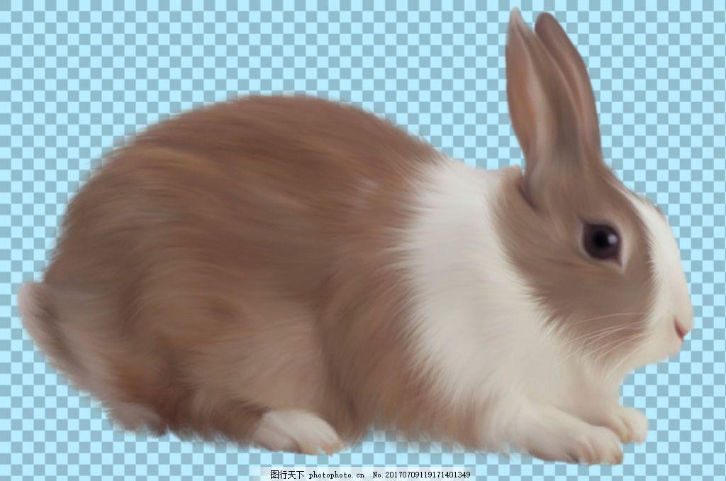 趴在地上的小兔子免抠png透明图层素材