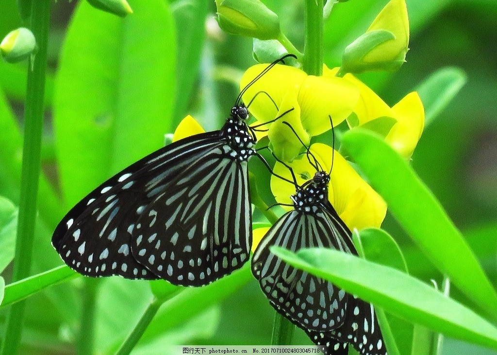 斑点 休息 停歇 花朵 黄色花朵 花枝 绿叶 叶子 绿色叶子 昆虫 动物