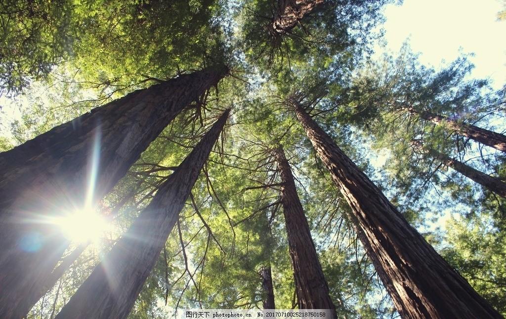 大树 树木 树林 森林 木材 摄影