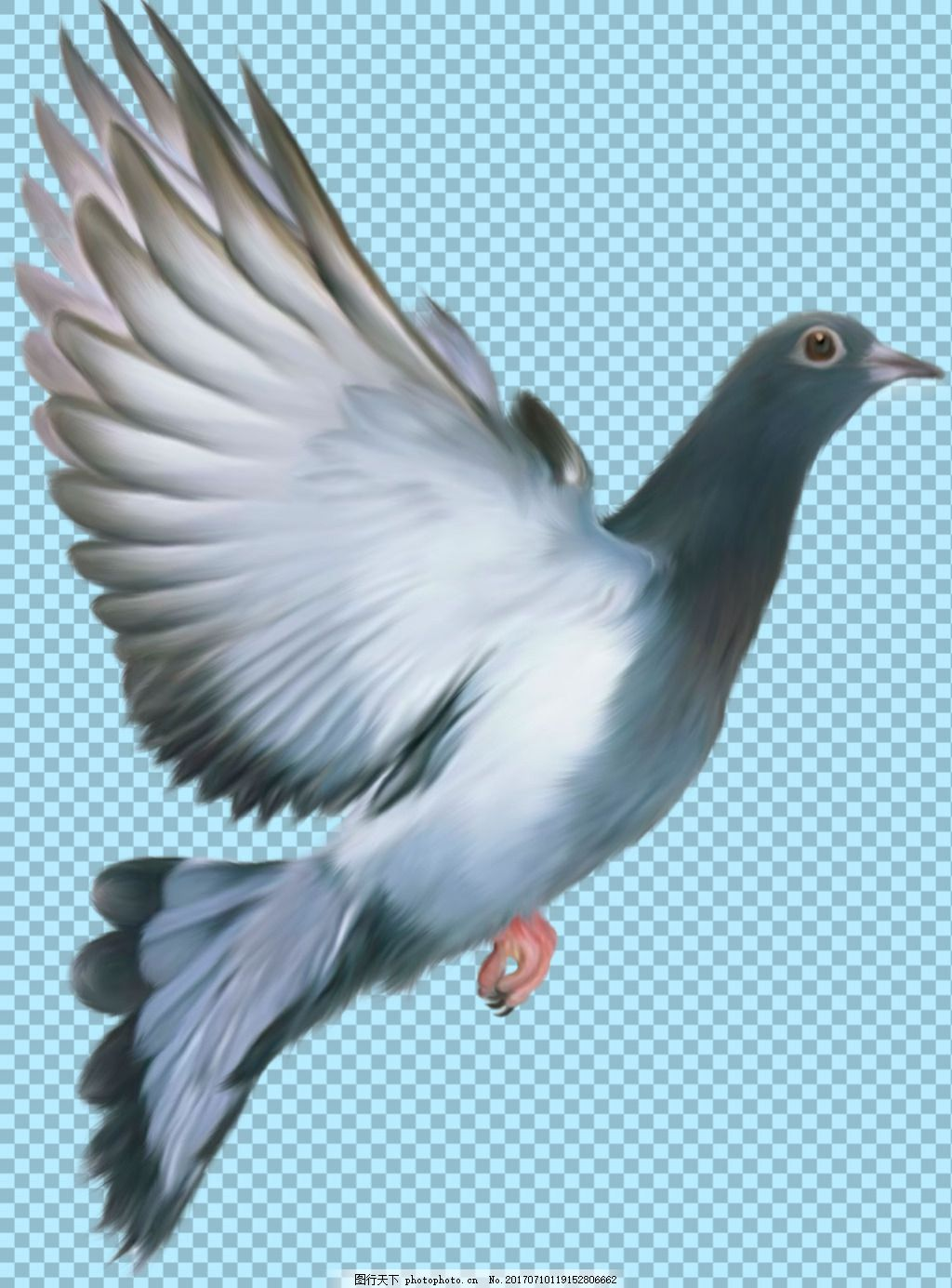 橄榄枝和白鸽的图片_白鸽简笔画大全_白鸽简笔画简易_白鸽简笔画画法_白鸽简笔画