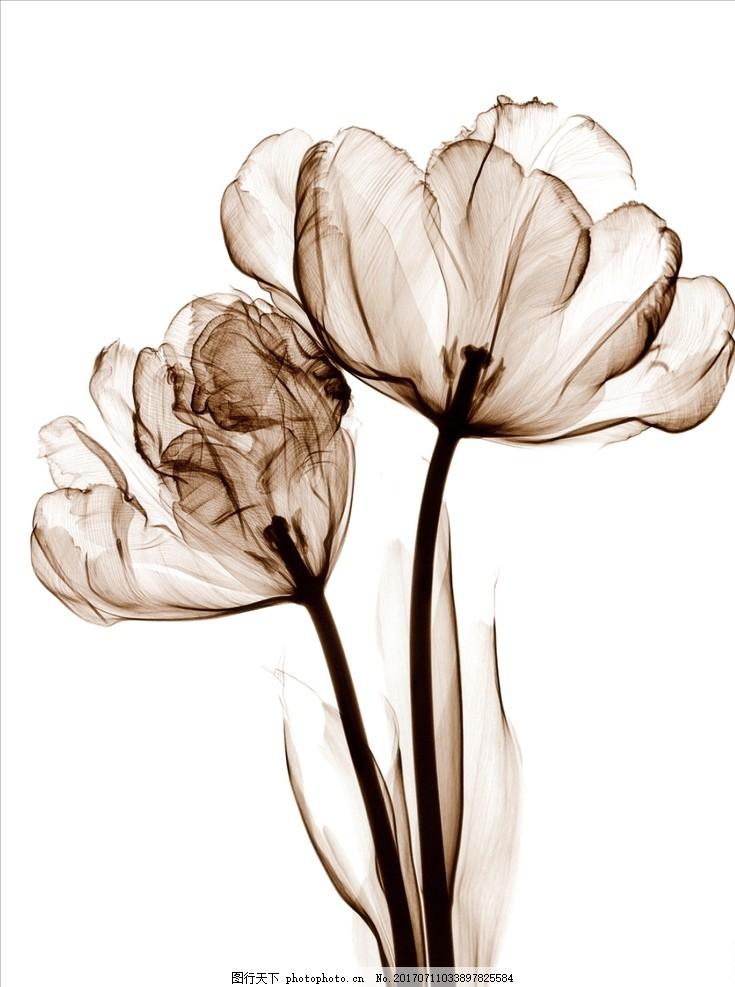 手绘海报 花卉海报 创意 高端 大气 欧美 美术 手绘素材 花朵 植物