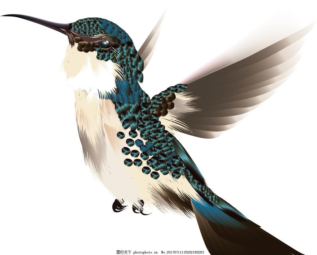 飞鸟黑白简笔画