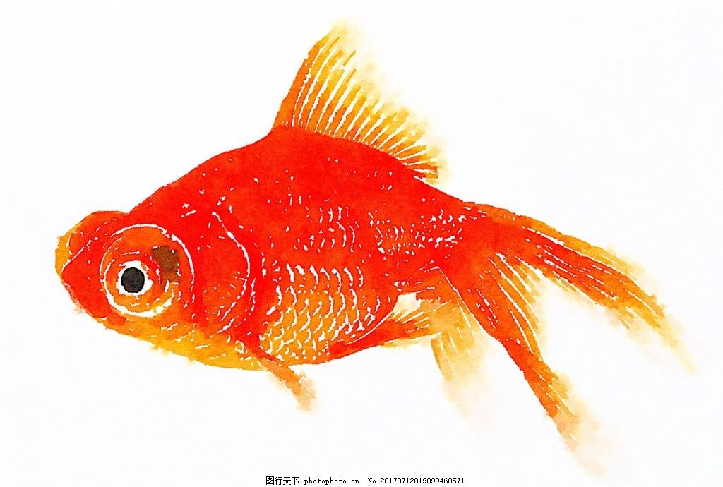 金鱼水彩画 鱼泡眼 尾巴 诗意 生物世界 鱼类 手绘 美术 艺术