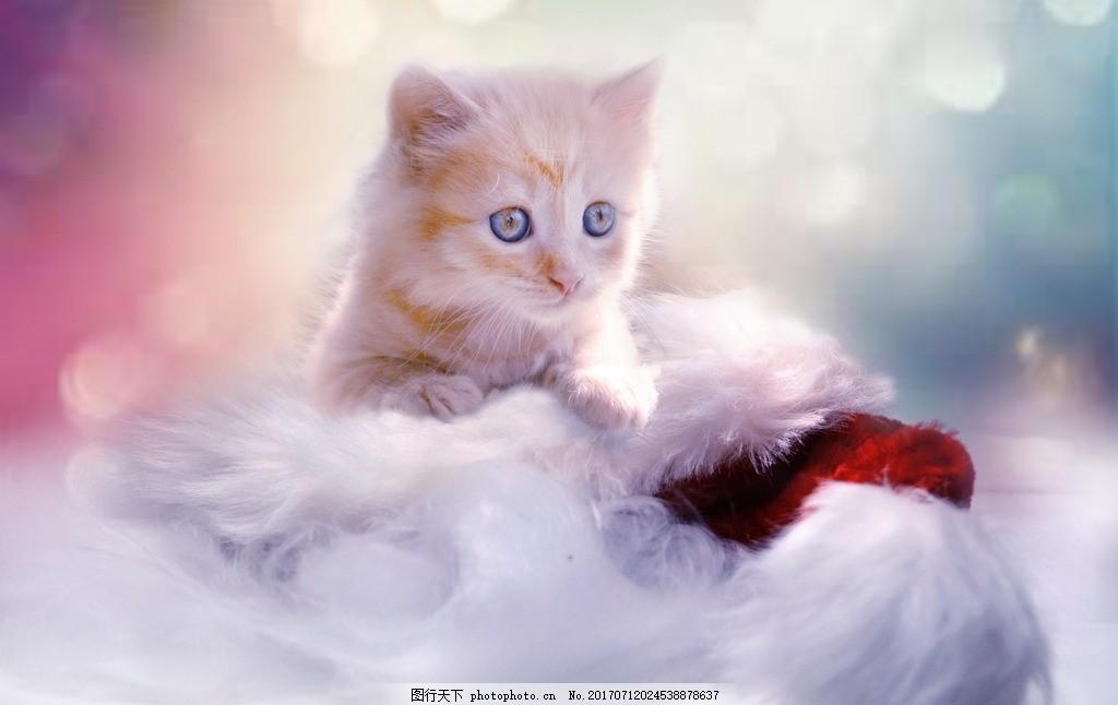 梦幻小猫 猫咪 花猫 宠物猫 动物 可爱猫 可爱猫咪 白猫 猫科