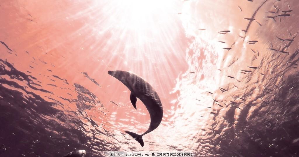 海豚 动物图片 海里动物 动物背景 摄影图片
