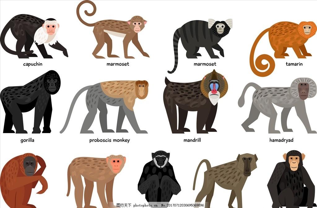 灵长类动物 猩猩 大猩猩 狒狒 小狗子 手绘卡通猴子 金丝猴 矢量图案