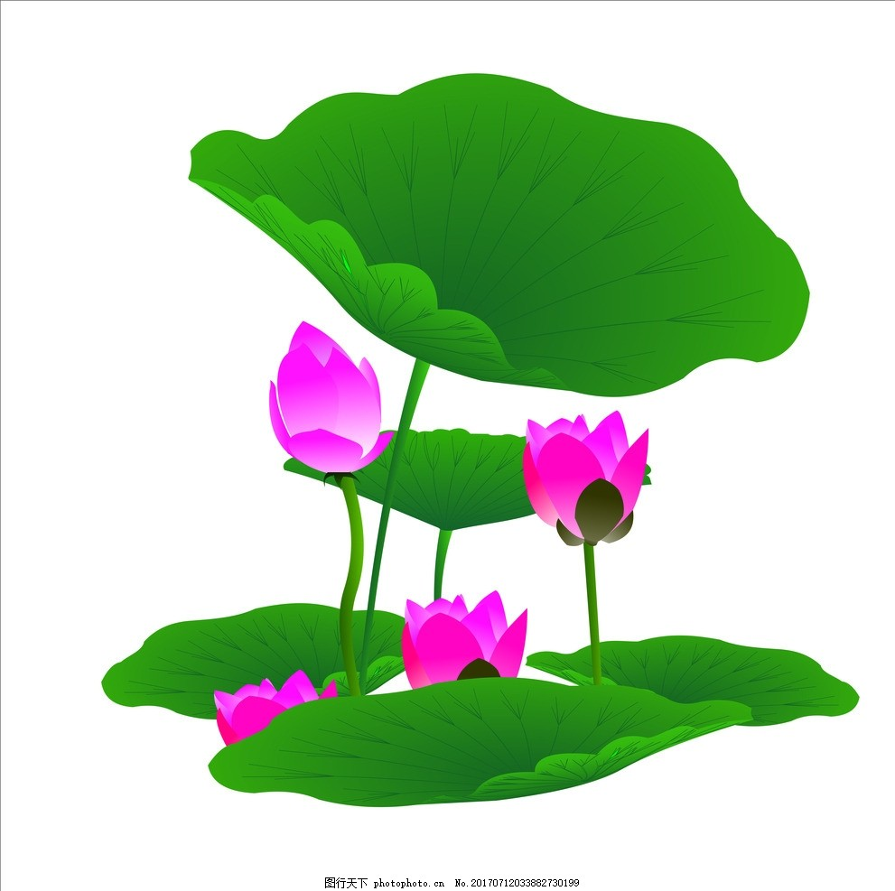 荷花 荷叶 鲜花 素材 装饰 背景 边框 花草 设计 其他 图片素材 cdr