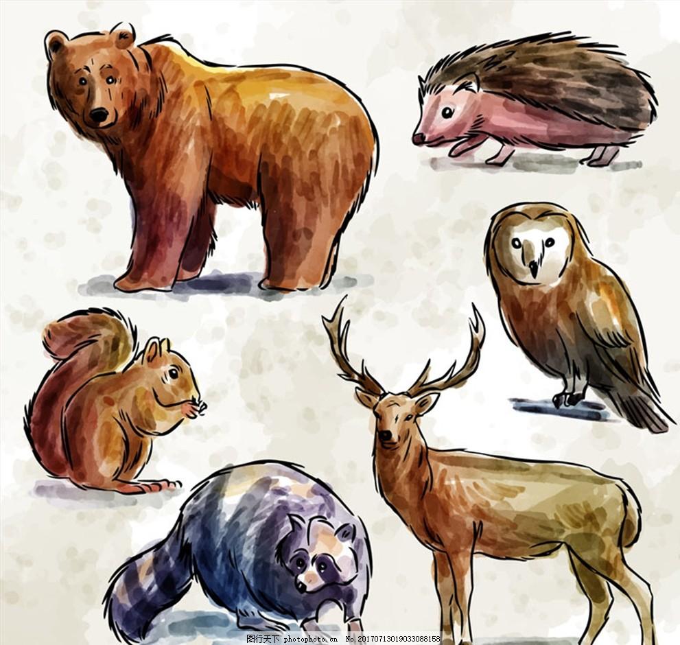 6款彩绘野生动物矢量素材 熊 刺猬 猫头鹰 松鼠 鹿 浣熊 森林