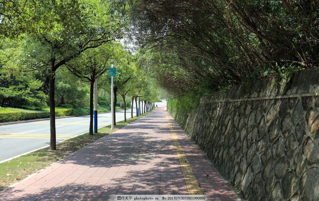 深圳绿道 骑车 行人道 平坦 绿化 植物 深圳街头 摄影 国内旅游