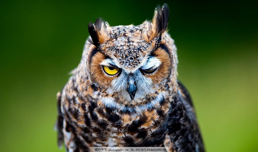 动物 猫头鹰 脊椎动物 杂食动物 飞禽类 手机照片 摄影