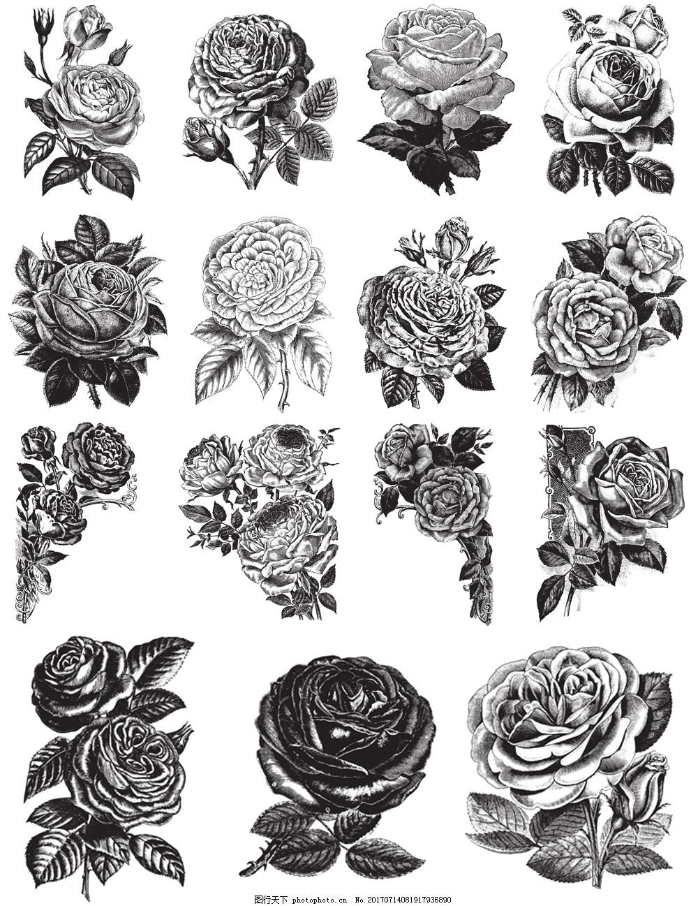 黑白手绘玫瑰花插画 植物 艺术 创意 花朵