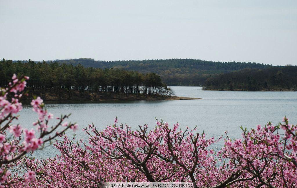 桃花 湖水 山 自然 美景 摄影 自然景观 山水风景 300dpi jpg