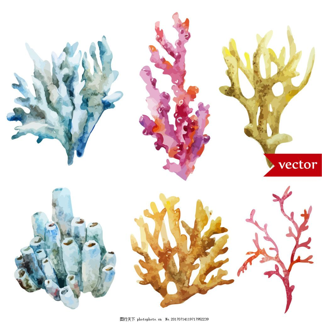 卡通彩色珊瑚水彩夏日海洋动物元素 植物 装饰 创意 涂鸦 小清新