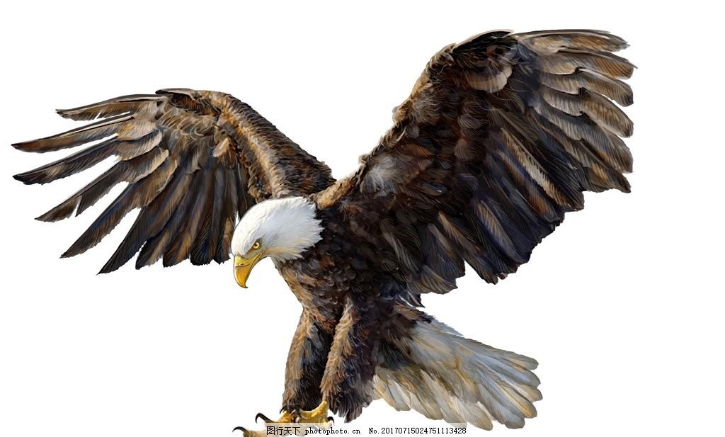 老鹰 唯美 可爱 动物 野生 飞鸟 鹰击长空 摄影