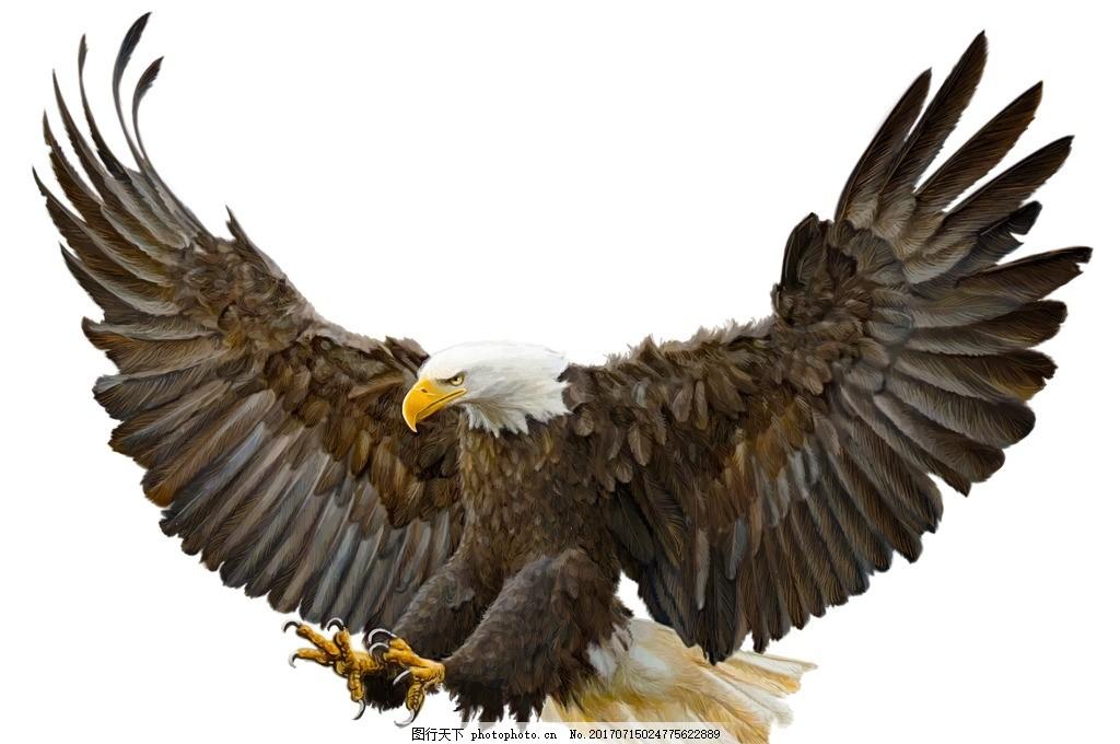老鹰 唯美 可爱 动物 野生 飞鸟 摄影