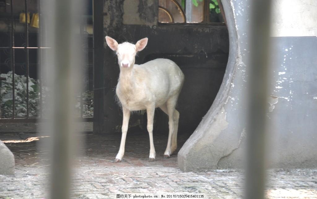 山羊 动物园 衡阳 旅游 摄影 拍照 其他生物
