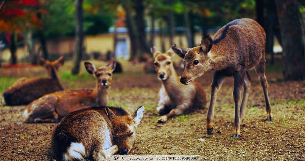 动物世界 鹿 五只鹿 鹿群 建筑 室内 摄影 人文 自然景观 田园风光