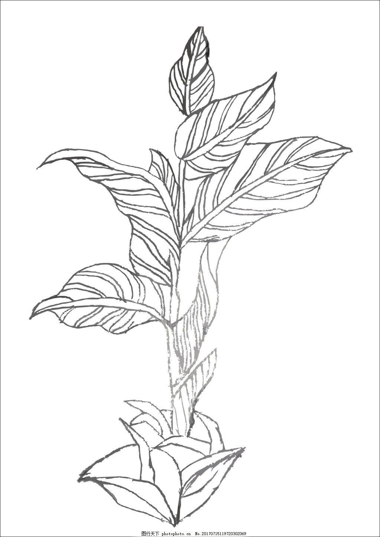 装饰图案叶子手绘 装饰图案 手绘叶子 线描植物 临摹叶子