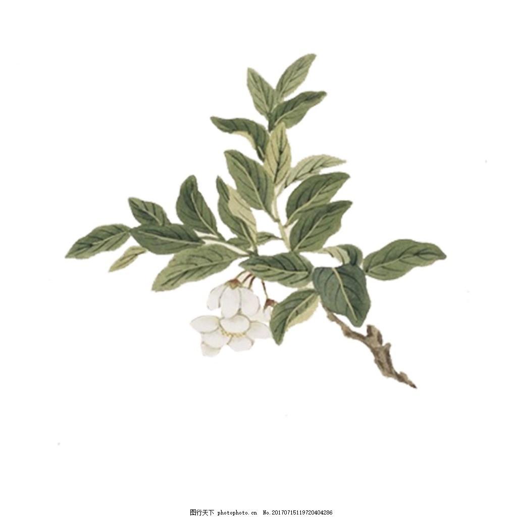 手绘绿叶花朵元素 手绘 油画 绿色树叶 树枝 白色花朵 png 免抠 素材