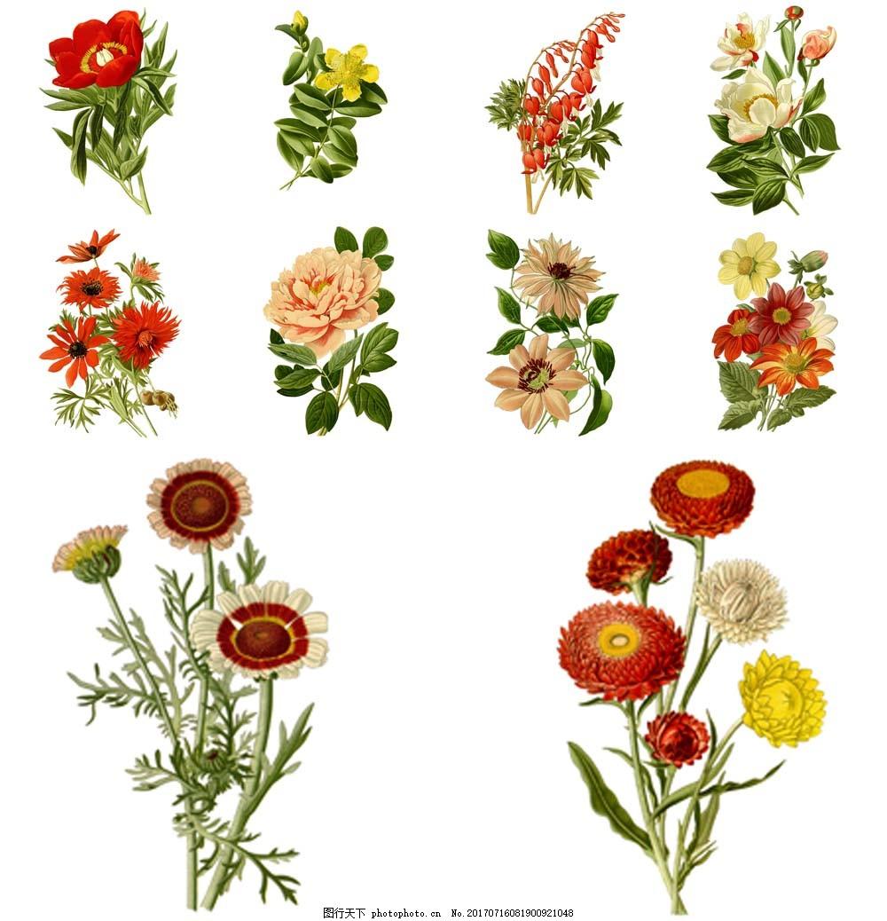 创意复古手绘花朵插画