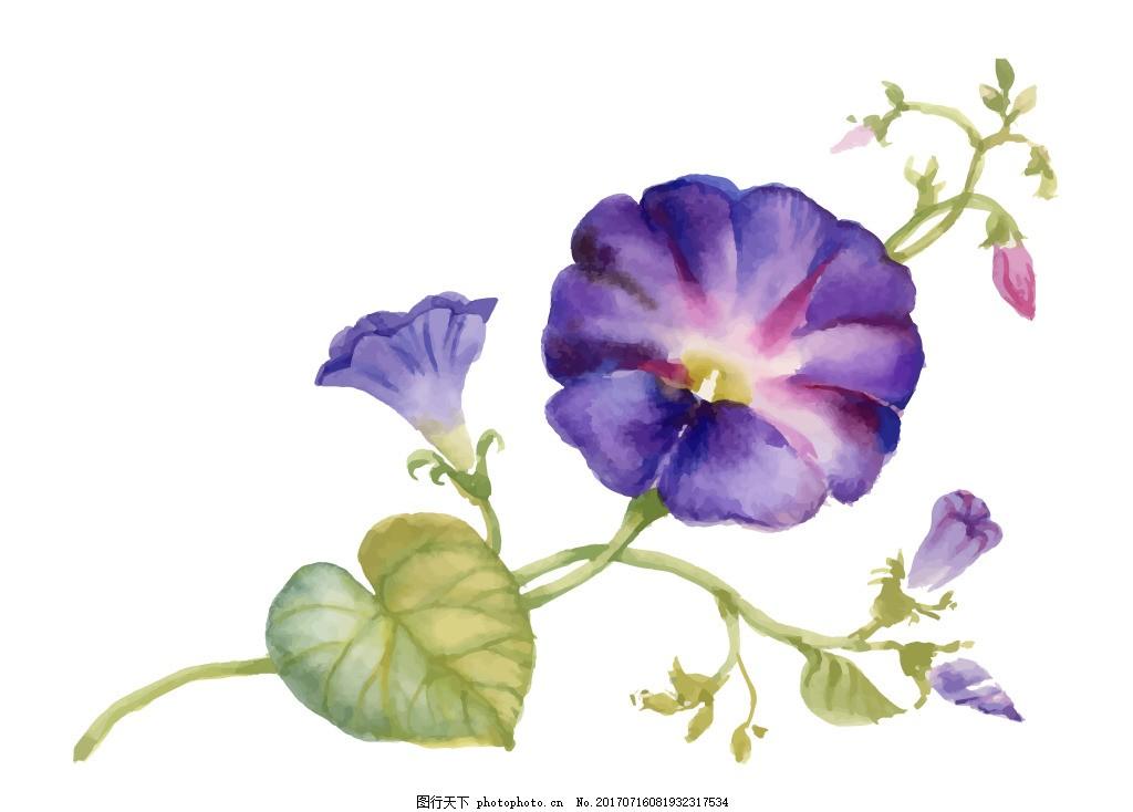 紫色喇叭花植物花朵水彩手绘矢量文件 花骨朵 紫色 花藤 花园 夏天