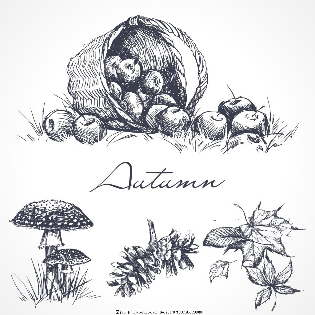 手绘各种植物植物 手绘 素描 植物 水果 苹果 蘑菇 松果 叶子 插画