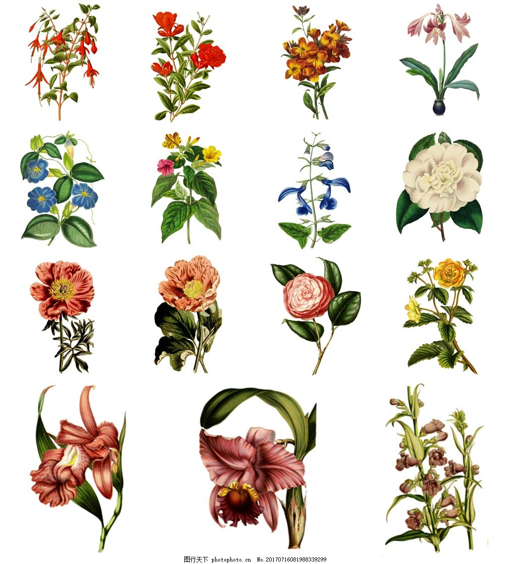 水彩绘复古花朵插画 植物 花朵 水彩绘 手绘 复古 兰花 唯美 插画