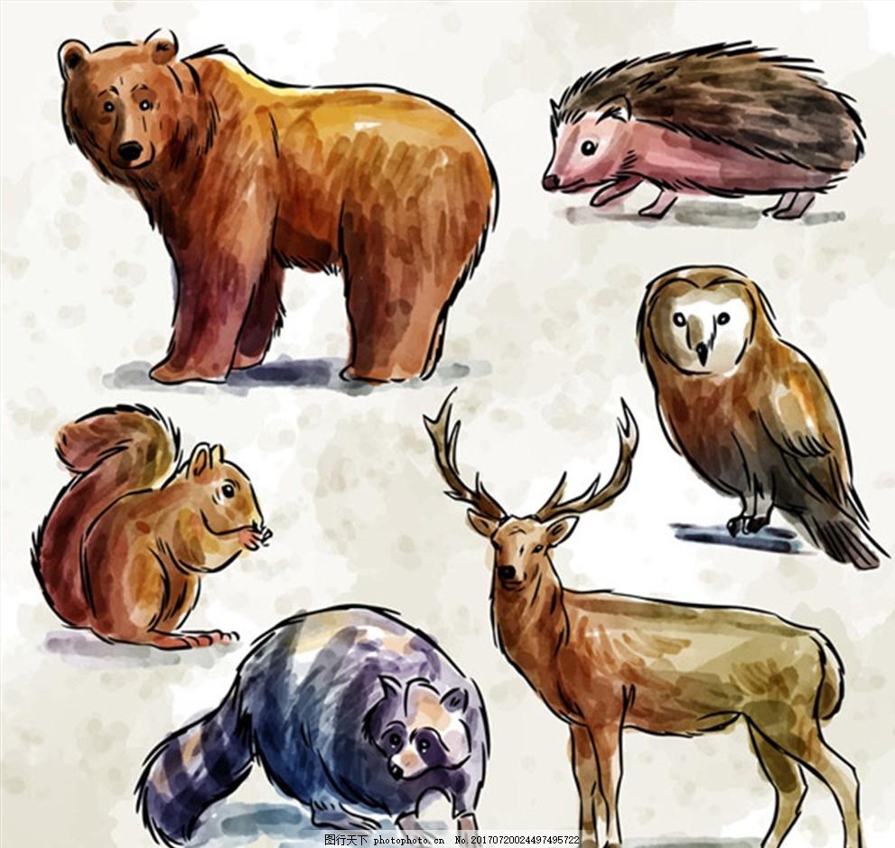 手绘动物 熊 刺猬 猫头鹰 松鼠 鹿 浣熊 森林
