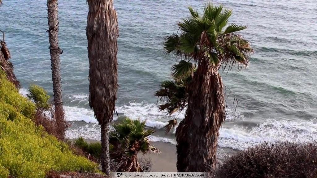 热带椰子树海边视频