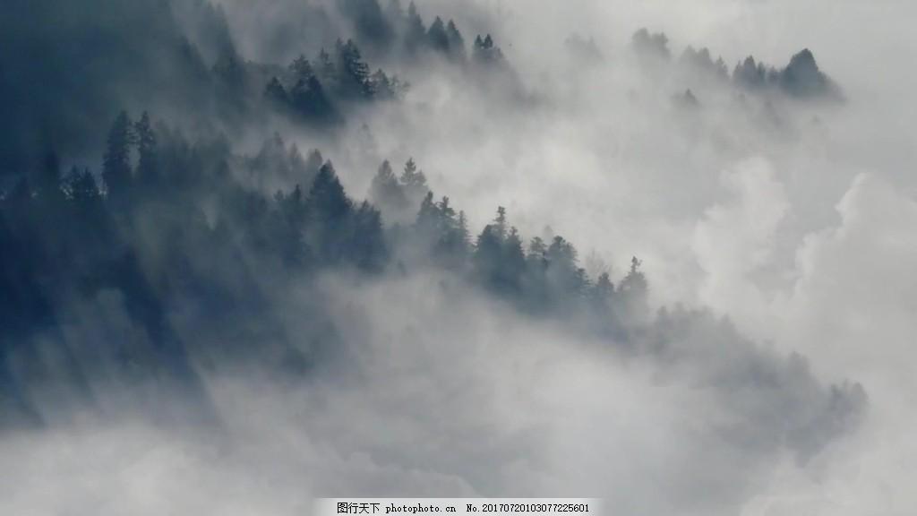 森林雾气自然风景 视频背景 视频素材 视频模版