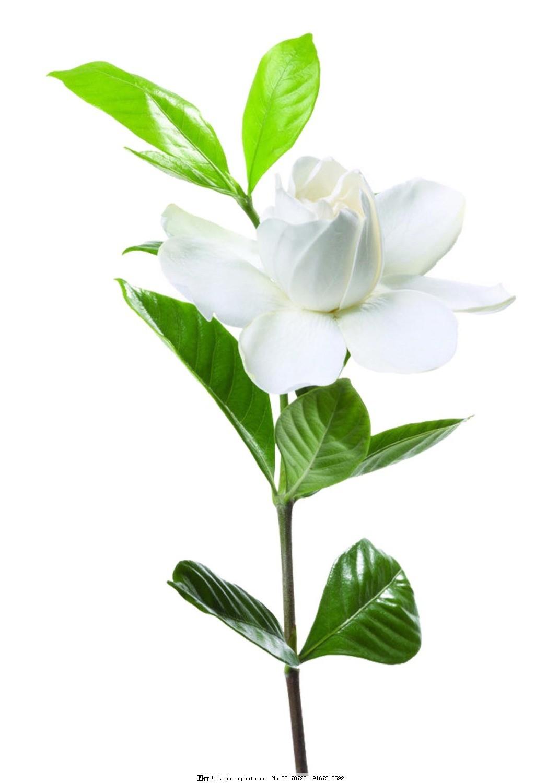 小清新绿叶花朵元素 梦幻 唯美 绿色树叶 花枝 花束 白色花朵