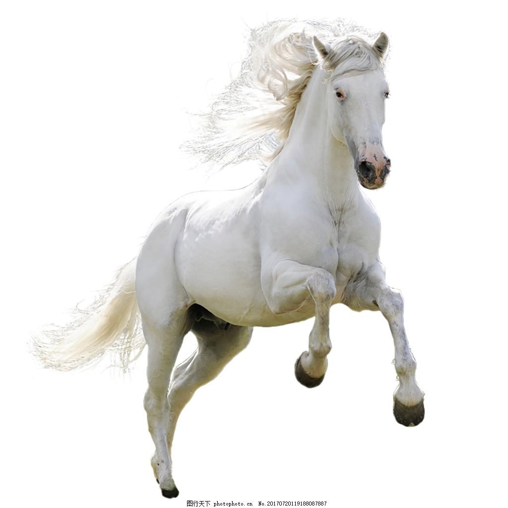 奔跑的白马 动物 潇洒