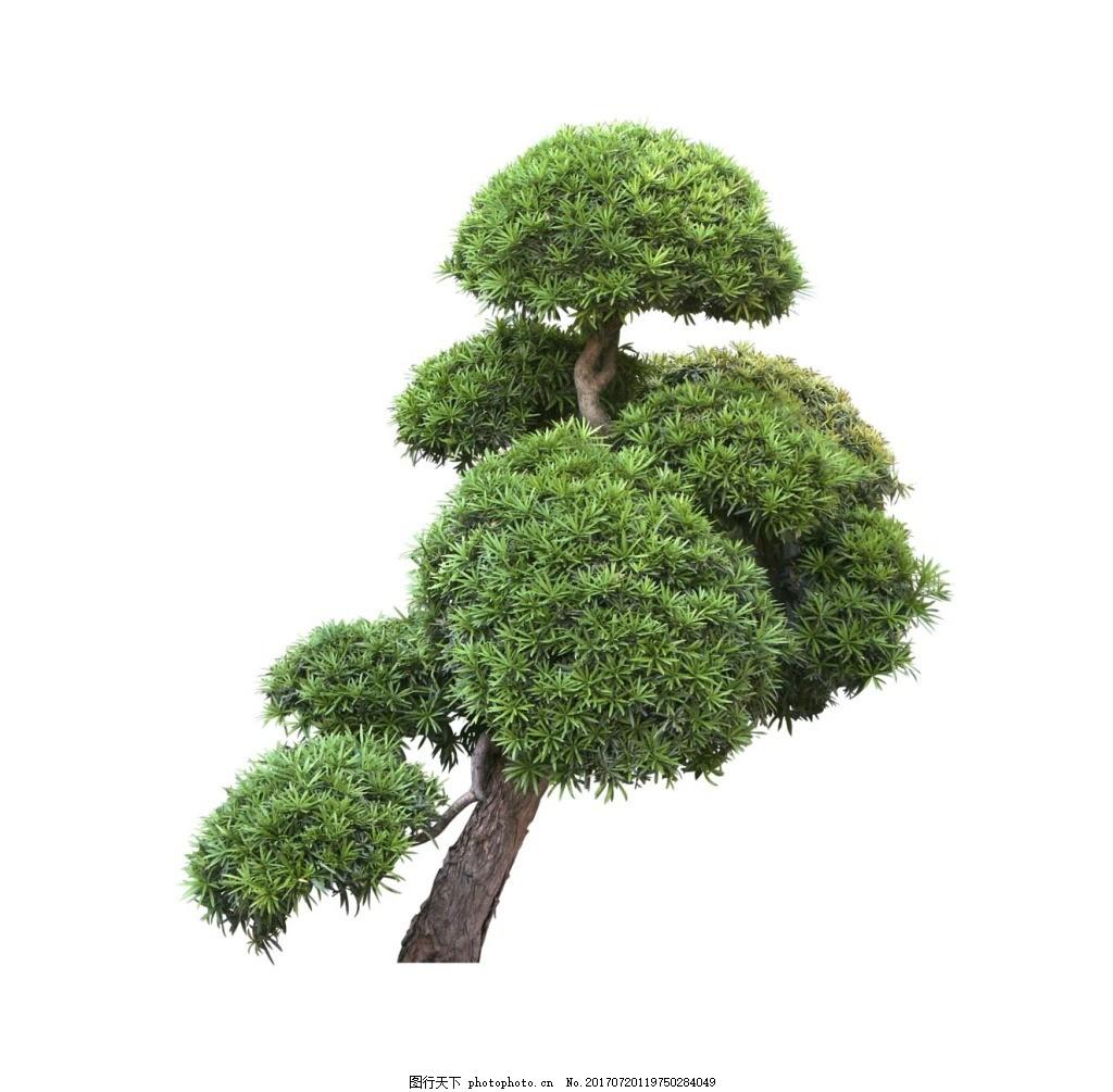 手绘歪脖子树元素 手绘 绿色树叶 大树 小清新 歪脖子树 png 免抠