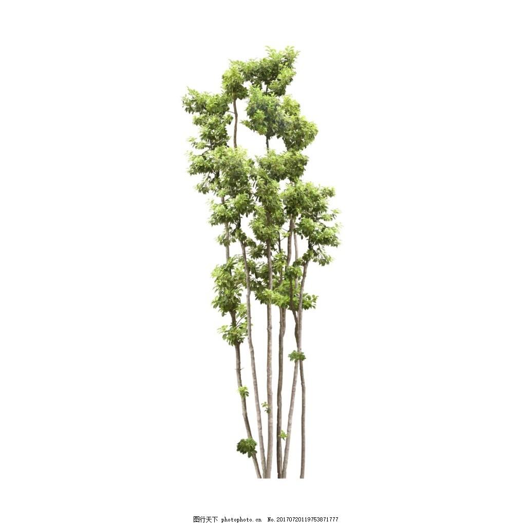 手绘树枝绿叶元素 手绘 细长树枝 小清新 绿色树叶 植物 png 免抠
