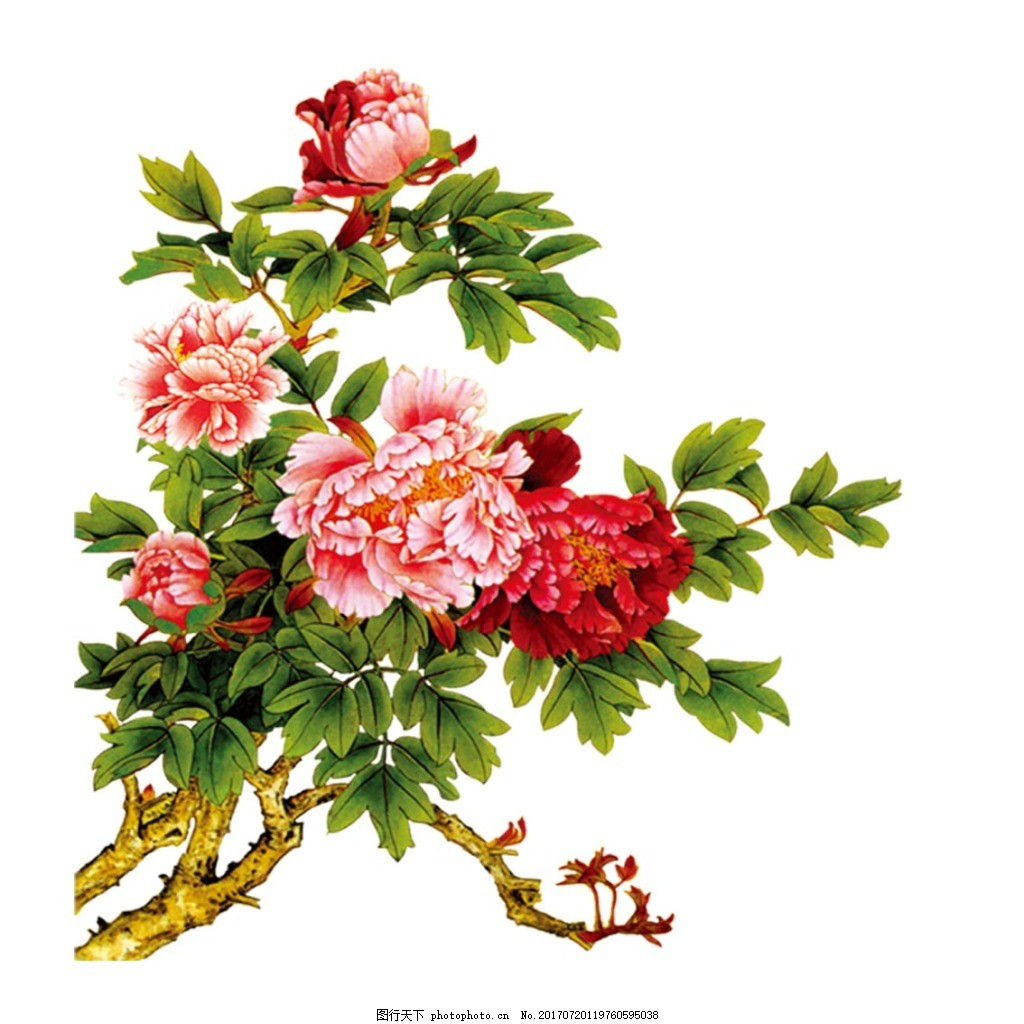手绘牡丹花丛元素