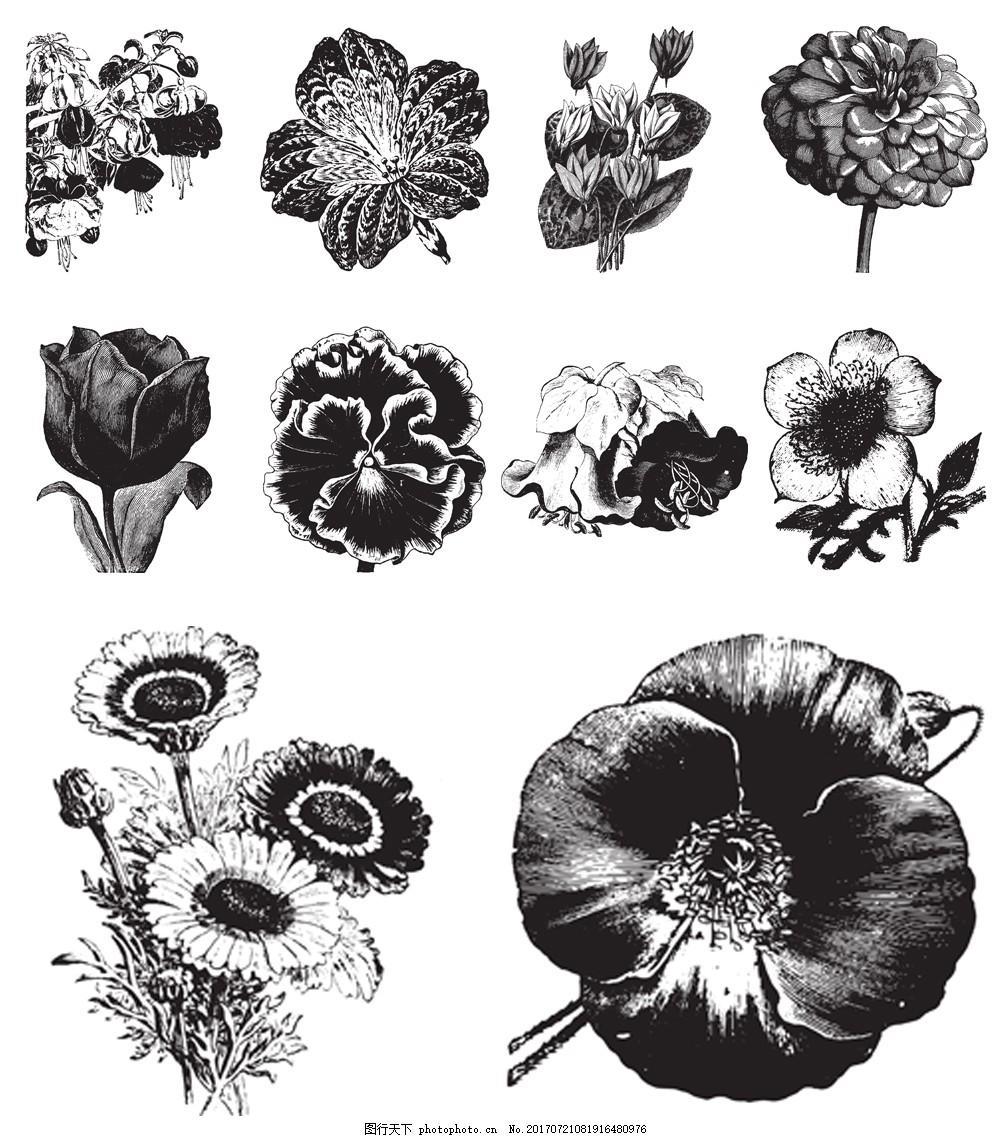 黑白手绘花朵植物插画