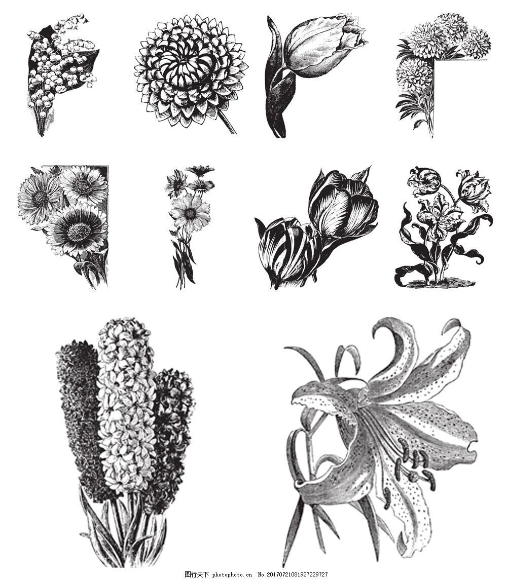 黑白手绘植物插画 百合花 郁金香 艺术 唯美