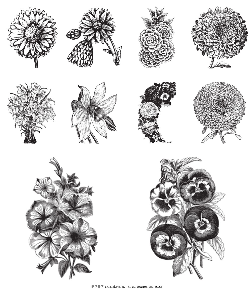 黑白手绘花朵插画 菊花 玫瑰花 植物 黑白 手绘 插画 素描