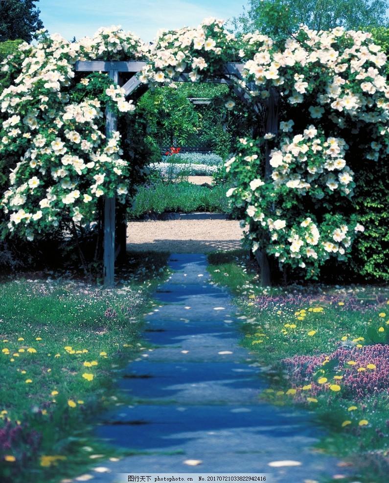 花园小路摄影背景 花园小路高清 花海 白色花 图片素材图片