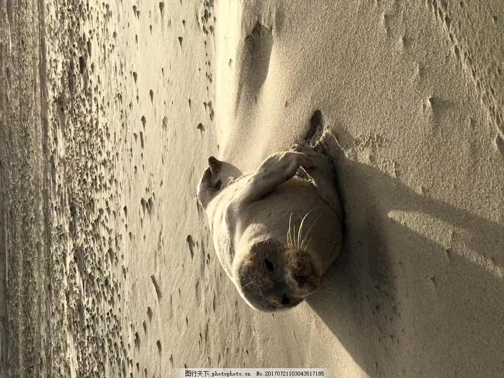 沙滩动物视频素材