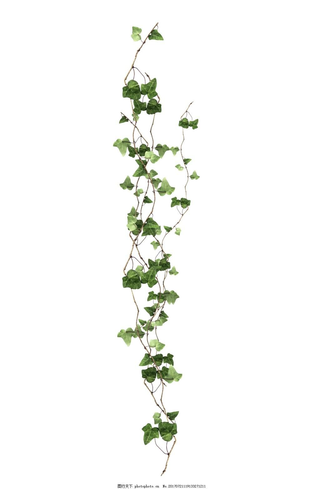清新树叶绿藤元素图片