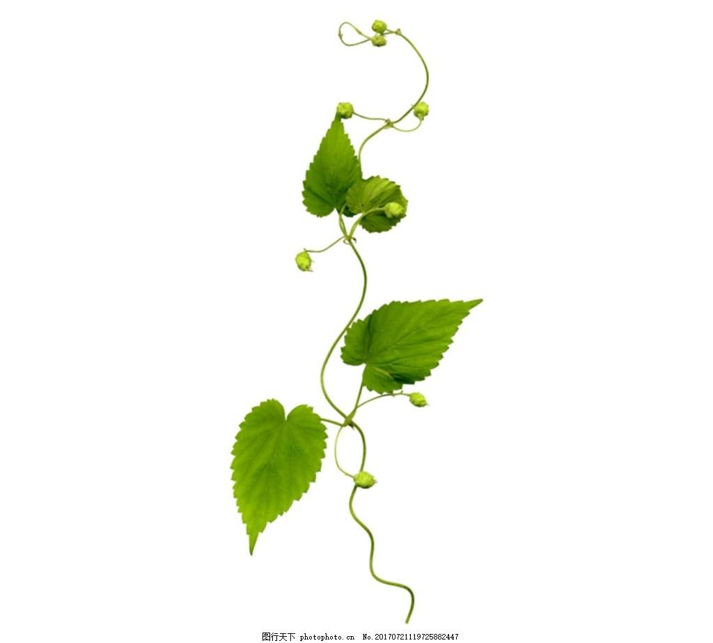 手绘树叶绿藤元素