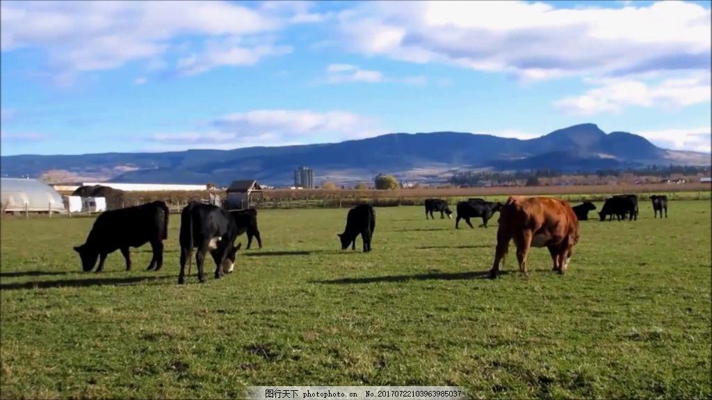 视频蓝天草原v视频视频,动物背景视频素材视频价视频套图片