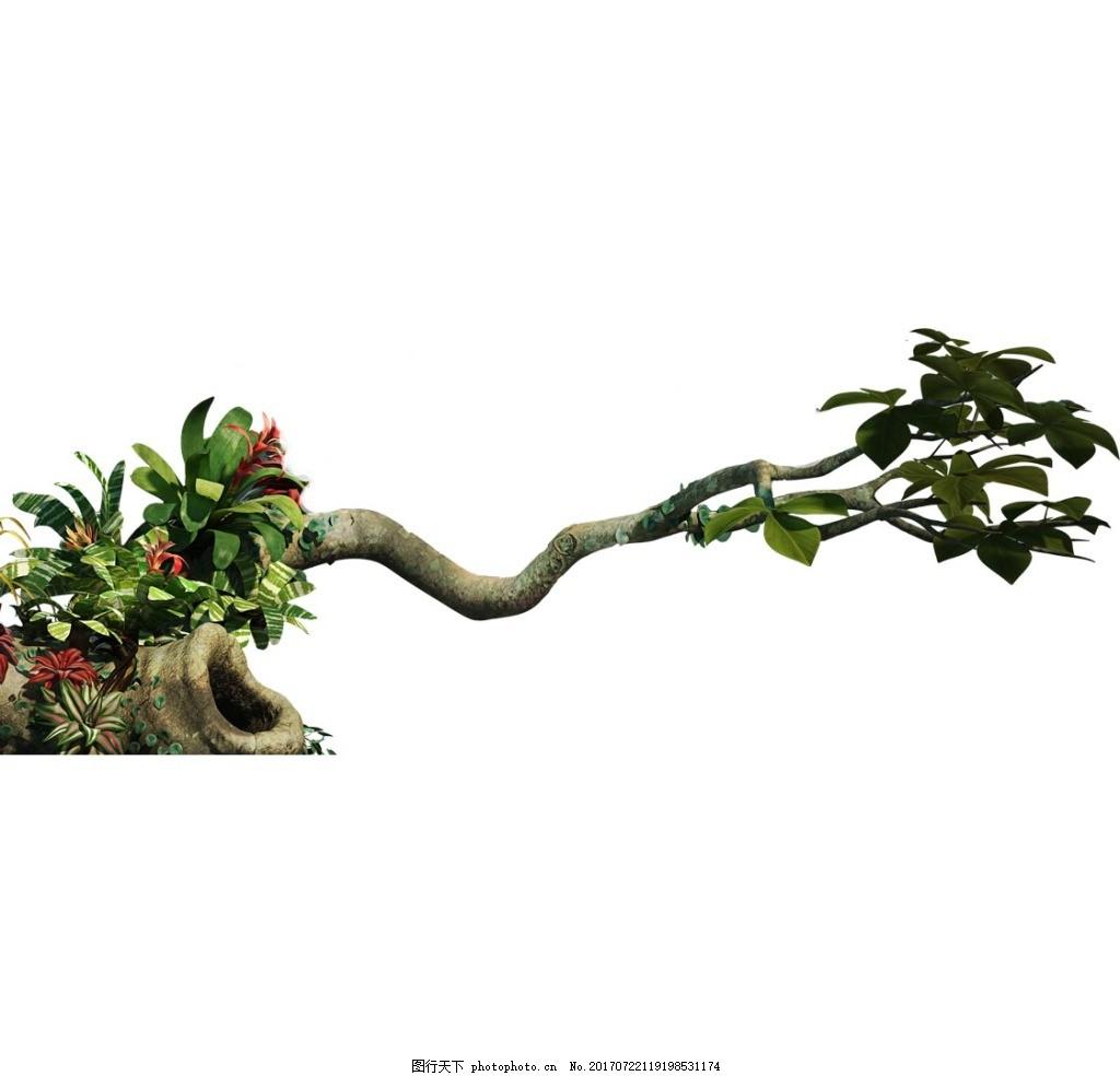 植物大树枯木元素 小清新 绿叶 果实 歪脖子树 树洞 免抠图片